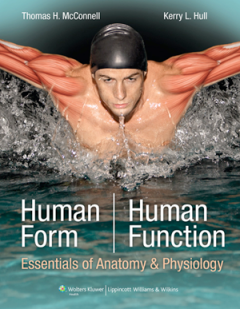 Human Form, Human function by McConnell & Hull © 2011 Lippincott Williams & Wilkins